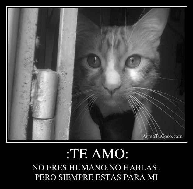 :TE AMO: