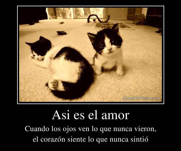 Asi es el amor