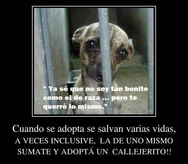 Cuando se adopta se salvan varias vidas,