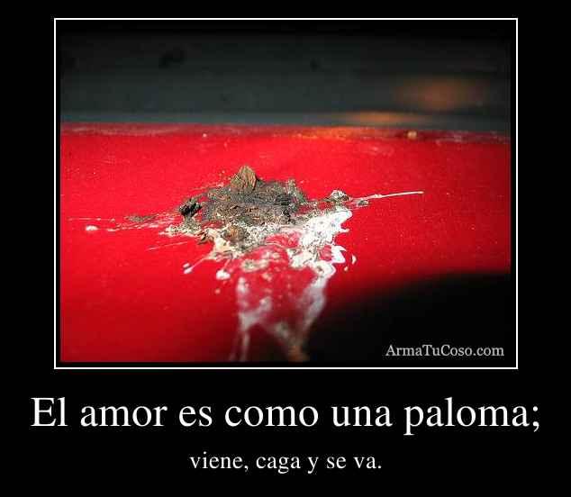 El amor es como una paloma;