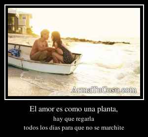 El amor es como una planta,