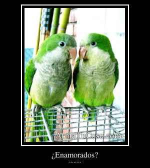 ¿Enamorados?
