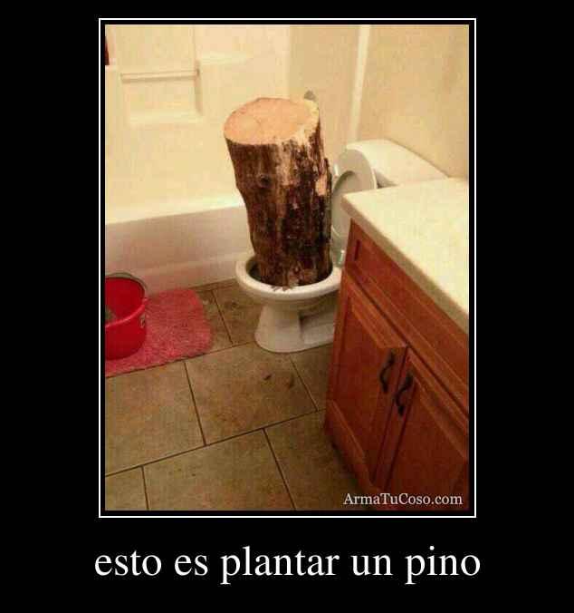 esto es plantar un pino