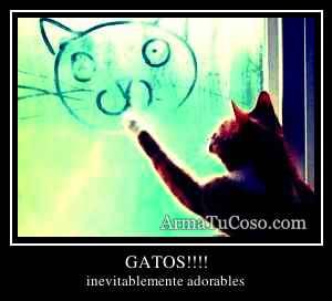 GATOS!!!!