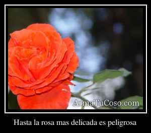 Hasta la rosa mas delicada es peligrosa