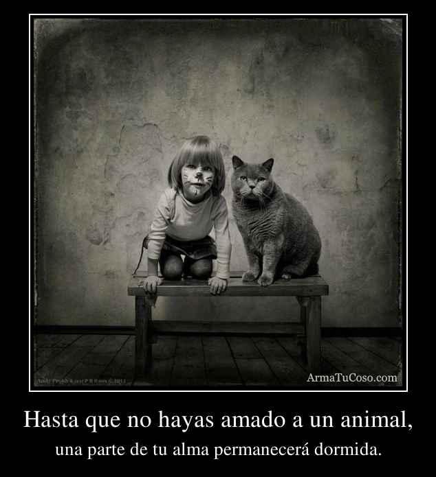 Hasta que no hayas amado a un animal,