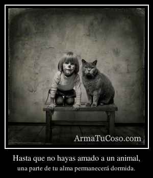 Hasta que no hayas amado a un animal,