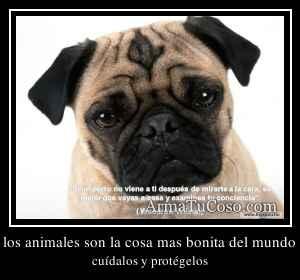 los animales son la cosa mas bonita del mundo