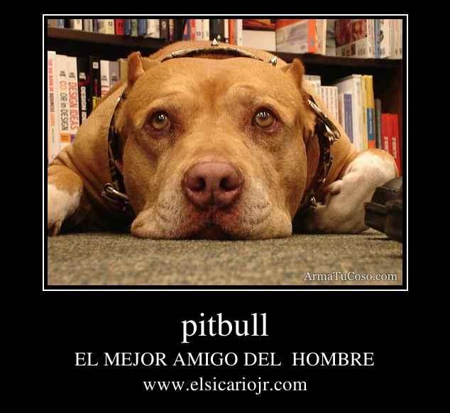 armatucoso-pitbull-13396.jpg