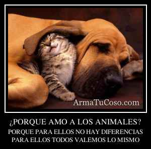 ¿PORQUE AMO A LOS ANIMALES?