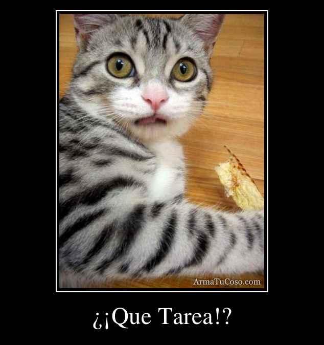 ¿¡Que Tarea!?