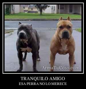 TRANQUILO AMIGO